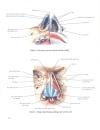 Atlas giải phẫu người Phần nội tạng Bs Mircea Ifrim