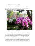 Kỹ thuật trồng Lan Hồ Điệp Đài Loan