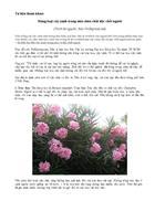 Những bài viết về cây xanh có đôc tố